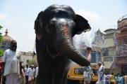 elphant water spray cool way