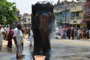 srirangam elephant at car fetival